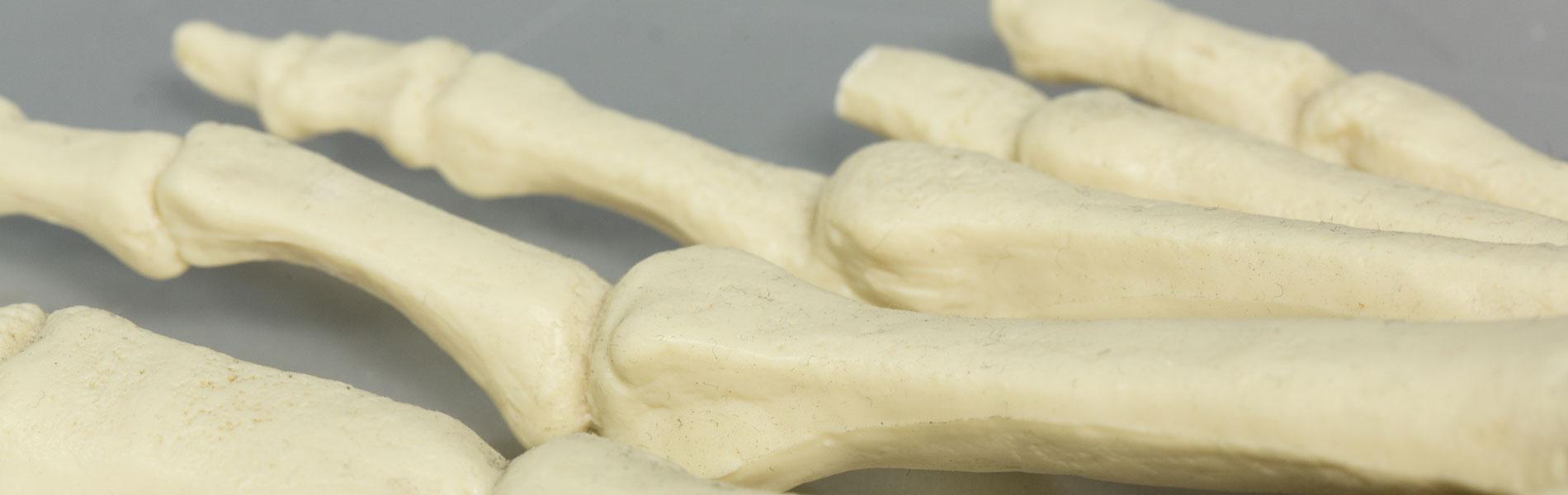 Orthopaedietechnik